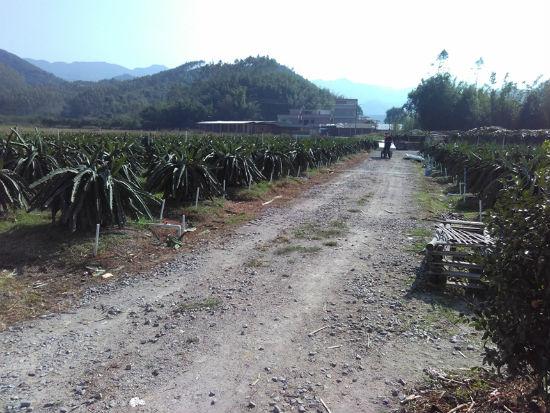广州从化火龙果种植基地冷库安装